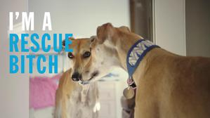 Battersea Dogs & Cats Home Rescues